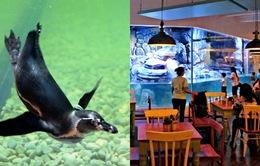 Nhà hàng chim cánh cụt thú vị tại Indonesia