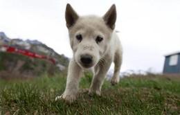 Kinh nghiệm quản lý chó thả rông tại nước ngoài