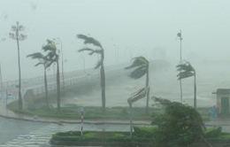 Quảng Bình: Nhiều cổng chào, cây xanh ngã đổ do bão số 10