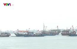 Quảng Trị tổ chức đánh bắt cá vụ Nam