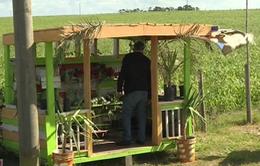 Quầy kinh doanh nông sản dựa vào sự trung thực tại Uruguay
