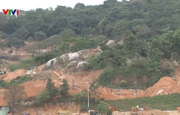 Đà Nẵng phải báo cáo có chấp nhận giữ nguyên trạng bán đảo Sơn Trà hay không