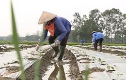 Hà Nội: 6 huyện cấp xong giấy chứng nhận quyền sử dụng đất nông nghiệp