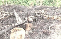 Nghệ An kỷ luật hàng loạt cán bộ liên quan đến vụ phá rừng Quỳ Hợp