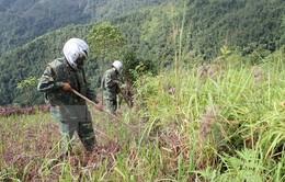 Rà phá bom mìn, khôi phục hơn 4.000 ha đất