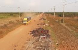 Sẽ tịch thu phương tiện đổ trộm rác thải trên tỉnh lộ Long An