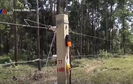 Đồng Nai chạy thử nghiệm hàng rào điện từ bảo vệ voi rừng