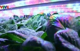 Việt kiều khởi nghiệp với mô hình trồng rau trong container