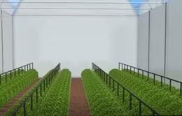 Phát triển thành phố nông nghiệp trong hố ở sa mạc