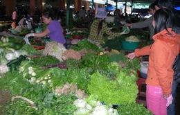 TP.HCM: Tăng cường kiểm soát tình trạng đội lốt rau sạch Lâm Đồng