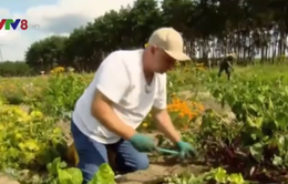 Đức: Trồng rau ảo, thu hoạch... thật