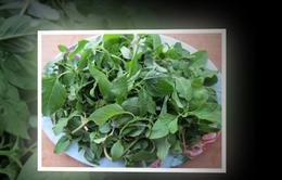 Những món ăn tốt cho sức khỏe từ rau dền cơm