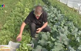 Mô hình rau sạch thu lợi nhuận cao tại Vương quốc Bỉ