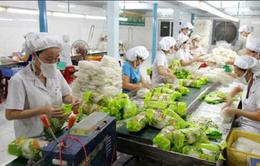 Hiệu quả công nghệ bảo quản rau quả sau thu hoạch tại Hà Nội