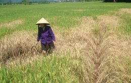 Hà Tĩnh hỗ trợ gần 34 tỷ đồng cho nông dân do thiên tai, dịch bệnh