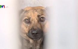 Ngày đầu xử phạt hành vi không rọ mõm chó ở nơi công cộng tại TP.HCM