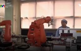 Robot thay thế nhân công trong các nhà máy