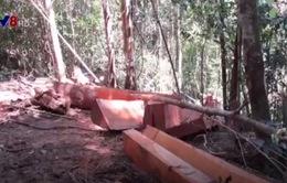 Khánh Hòa: Đường mở sẵn, thuận tiện cho… lâm tặc phá rừng
