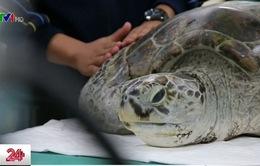 Tìm thấy gần 1.000 đồng tiền xu trong... ruột rùa biển tại Thái Lan