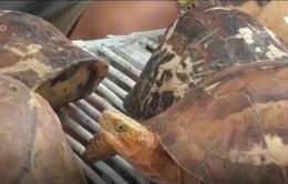 Phát hiện nhiều cá thể rùa bị nuôi nhốt trái phép