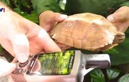 Tái thả 30 cá thể rùa Sa Nhân quý hiếm về tự nhiên