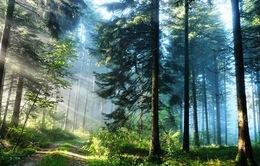 Giải pháp bảo vệ và phát triển tài nguyên rừng bền vững