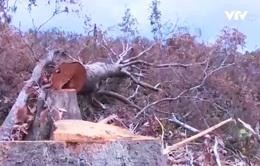 Phú Yên: Xác định vùng trọng điểm phá rừng