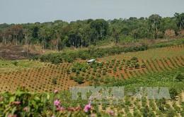 Đăk Lăk chấm dứt chuyển đổi diện tích rừng tự nhiên nghèo