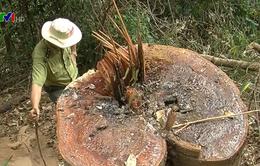 Kon Tum xử lý nghiêm vụ phá rừng phòng hộ ở Đăk Hà
