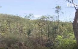 Ninh Thuận: Nguy cơ cháy rừng tăng cao