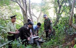 Đà Nẵng yêu cầu cung cấp số ĐTDĐ của Chi Cục trưởng Kiểm lâm cho báo chí