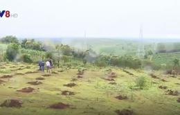 """BQL rừng phòng hộ Bắc Biển Hồ: """"Phù phép"""" đất công thành đất tư"""