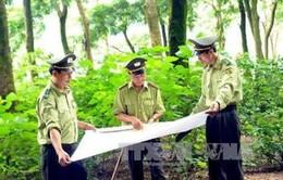 Tiết kiệm hơn 200 tỷ đồng kinh phí thực hiện điều tra, kiểm kê rừng toàn quốc