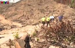 Bắt đối tượng đầu tiên trong vụ phá rừng Tiên Lãnh, Quảng Nam