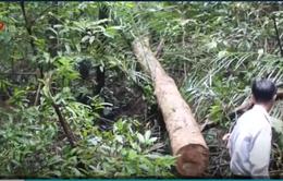 Khởi tố hình sự vụ phá rừng tại Bình Phước