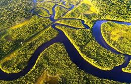 Dự án tái tạo rừng nhiệt đới lớn nhất từng có với 73 triệu cây