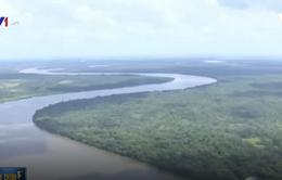 Brazil: Tranh cãi xung quanh quyết định mở rừng Amazon để khai thác tài nguyên
