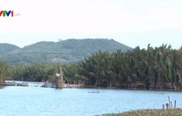 Cân nhắc việc phá rừng dừa nước trăm tuổi ở Quảng Ngãi