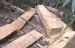Kon Tum siết chặt quản lý, bảo vệ rừng tự nhiên