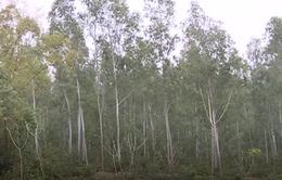 Yêu cầu Vĩnh Phúc báo cáo Thủ tướng vụ lấy rừng phòng hộ xây nghĩa trang