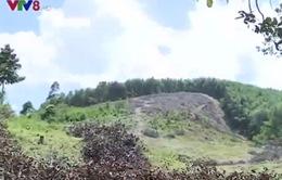 Nguy cơ lũ lụt gia tăng do phát triển kinh tế rừng thiếu bền vững