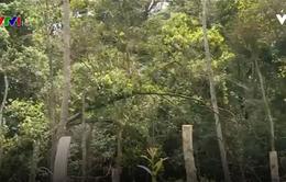 Xử lý lãnh đạo công ty lâm nghiệp để mất rừng