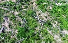 Rừng tự nhiên ở Nghệ An bỗng biến thành... rừng trồng