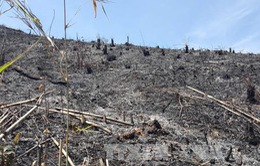 Đăk Nông: Hàng chục ha rừng bị đốt trụi