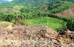 Bình Định xử lý trách nhiệm để xảy ra 2 vụ phá rừng lớn