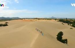 Nông nghiệp sa mạc thích ứng biến đổi khí hậu