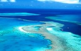 Rạn san hô Great Barrier thoát danh sách di sản bị nguy cấp
