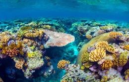 """Rạn san hô lớn nhất Australia """"thoát hiểm"""""""