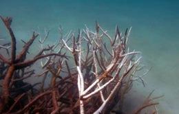 Công bố những hình ảnh mới về rạn san hô Great Barrier bị tẩy trắng