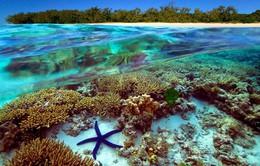 Chiêm ngưỡng rạn san hô lớn nhất thế giới vào mùa sinh sản